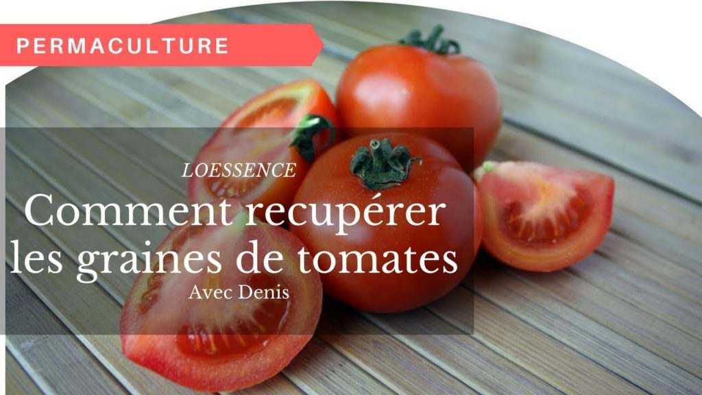 comment recup rer les graines de tomates. Black Bedroom Furniture Sets. Home Design Ideas