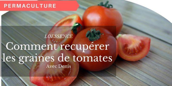 Comment Recupérer Les Graines De Tomates