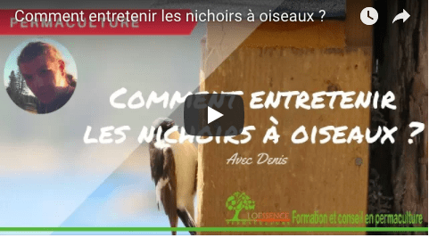 Comment Entretenir Les Nichoirs à Oiseaux ?