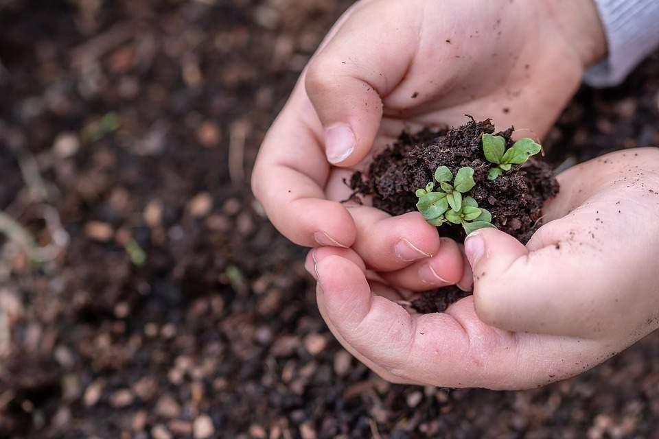 La Méthode De Semis En Pleine Terre Enfin Adaptée Au Paillage Et Couvert Végétal