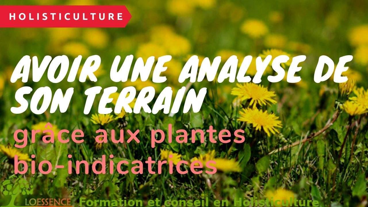 Comment Avoir Une Analyse De Son Terrain Grâce Aux Plantes Bio-indicatrices Et Sans Connaissances En Matière De Botanique