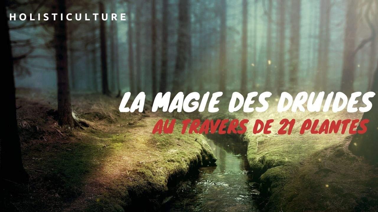 La Magie Des Druides Redécouverte Au Travers De 21 Plantes