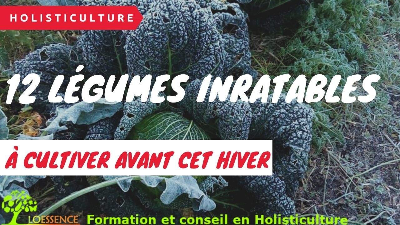 Mon Potager Réussite, 12 Légumes Inratables à Cultiver Avant Cet Hiver Au Potager