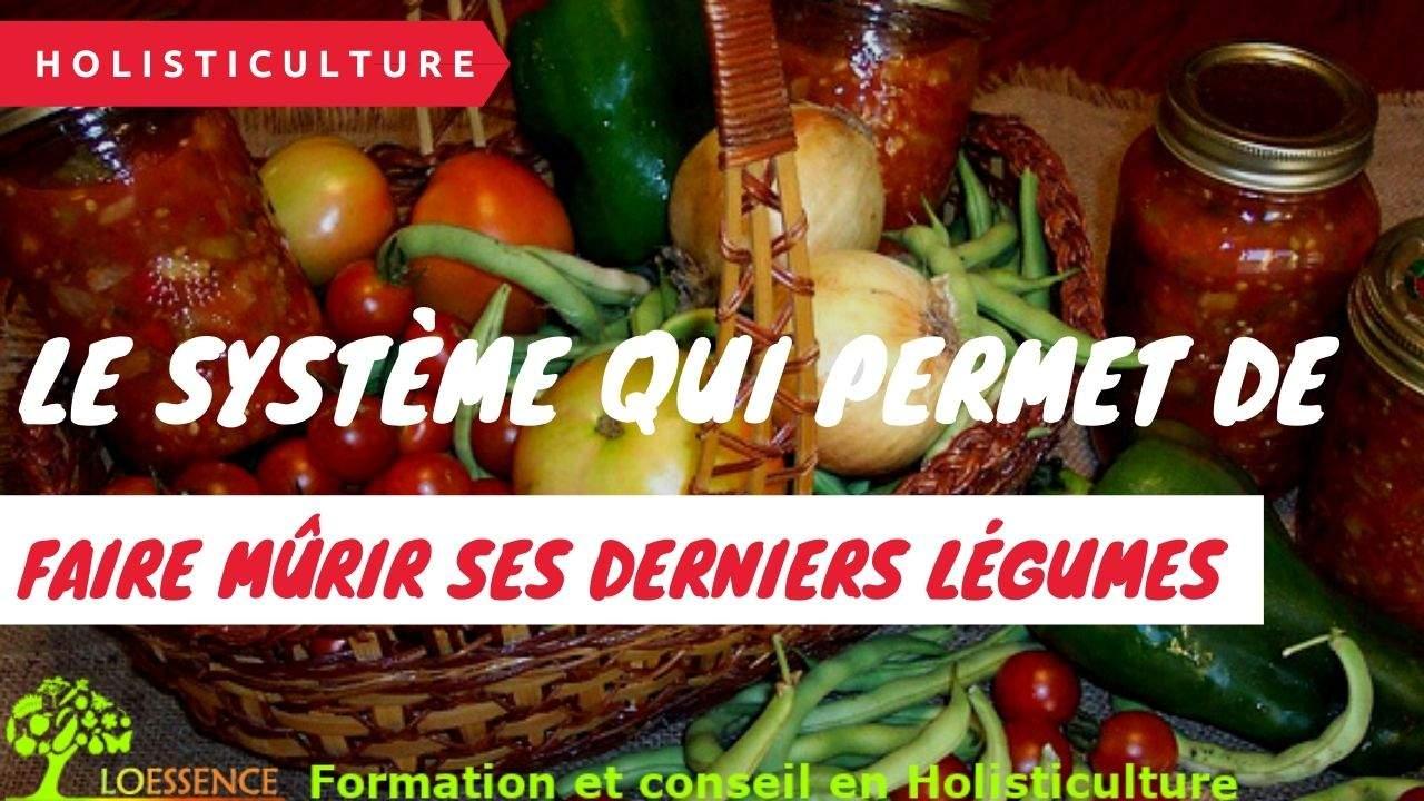 Le Système Qui Permet De Faire Mûrir Ses Derniers Légumes Avant L'hiver, Même Si La Chaleur N'est Plus Vraiment Là