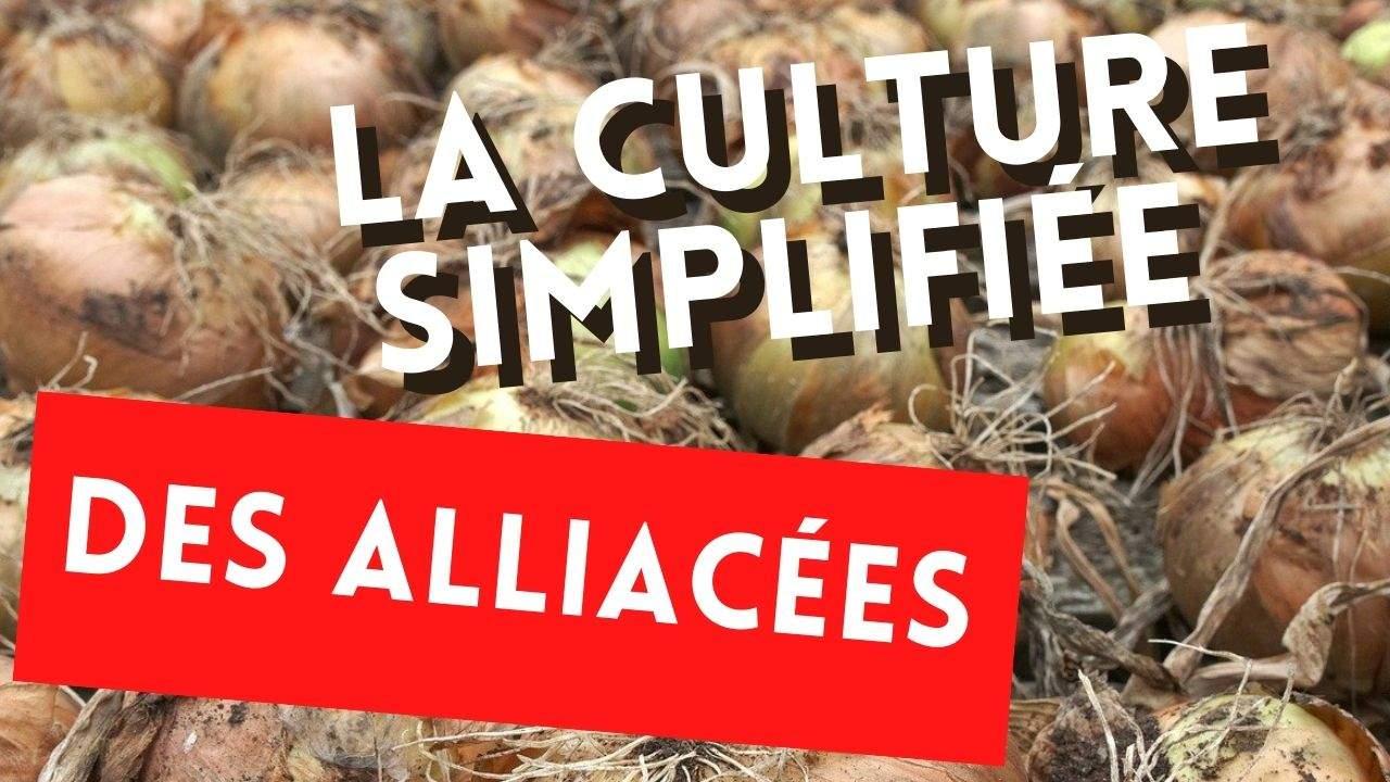 La culture de l'ail, oignon et échalote rendu facile et productive sans avoir besoin de faire une formation maraîchage bio